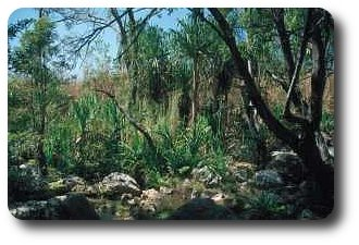 Im Canyon de Makis